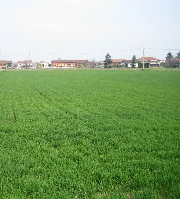Terreno residenziale  in VENDITA Azzano Decimo (PN)
